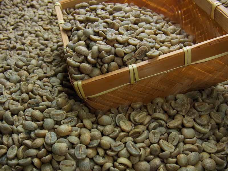 生豆コーヒーガテマラSHB (10kg入) :【HLS_DU】