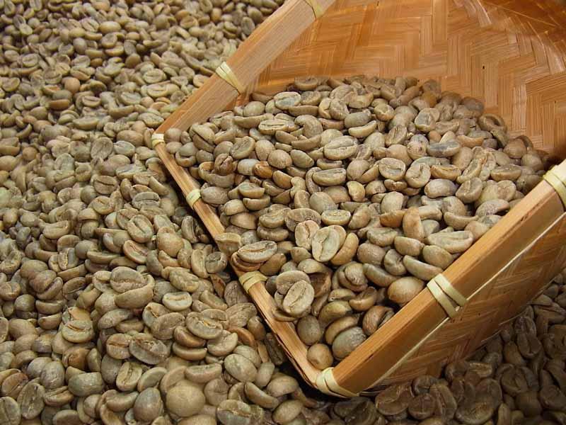 生豆コーヒーインド・アラビカA (10kg入) :【HLS_DU】