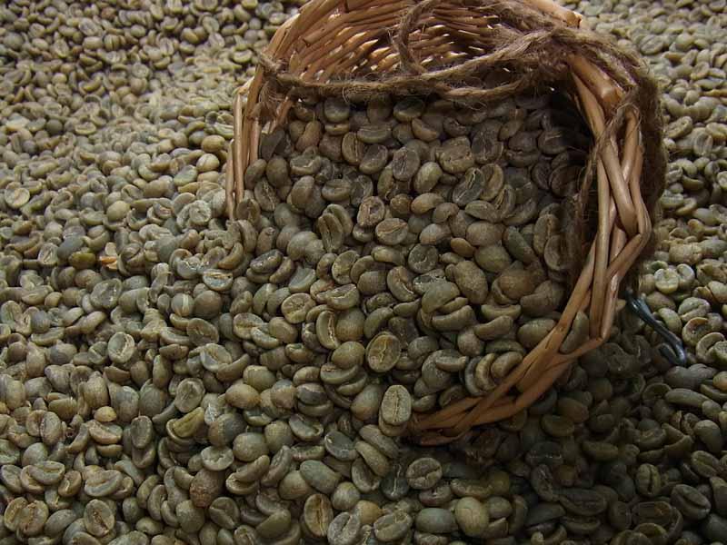 生豆コーヒーキリマンジャロ (10kg入) :【HLS_DU】