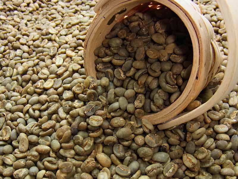 生豆コーヒーマンデリン G-1 (10kg入) :【HLS_DU】