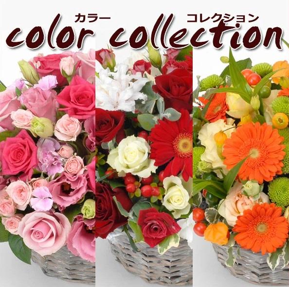 ジャスト10000円!お好きな色合いをお選び下さい♪お花屋さんにおまかせ!お祝い・お誕生日・結婚お祝・出産お祝・開店お祝・結婚記念日・お礼・発表会・成人式など。
