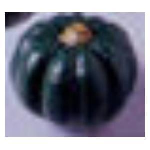 かぼちゃ【9912】 ローヤル