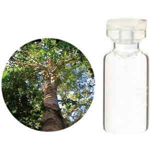 08-436-2130 生活の木 エッセンシャルオイル コパイバ 1000ml(業務用サイズ・受注生産品)