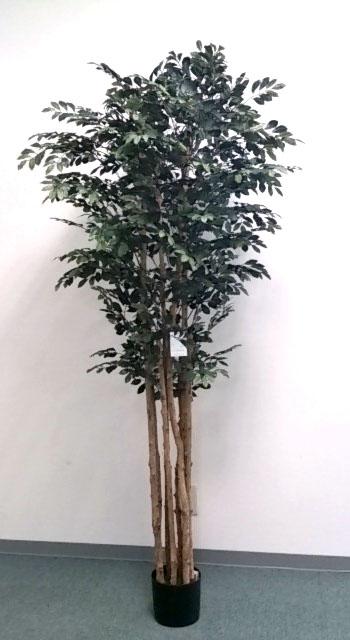 【ナチュラルツリー・観葉】180cmトネリコツリー(ナチュラルトランク)