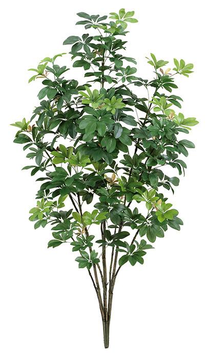 【ツリー・観葉】150cmカポックツリー(M)(ナチュラルトランク)・グリーン