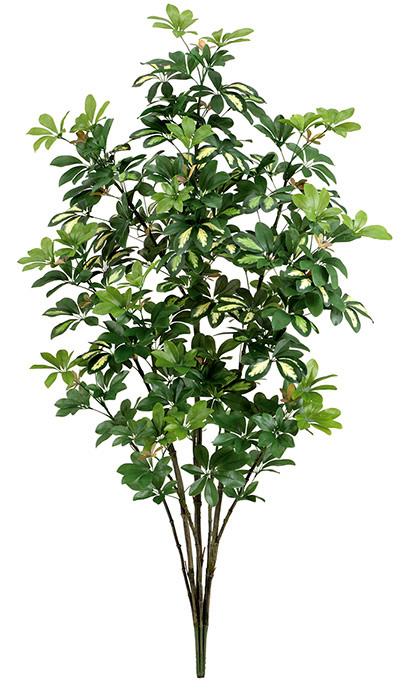【ツリー・観葉】150cmカポックツリー(M)(ナチュラルトランク)・グリーン/ホワイト
