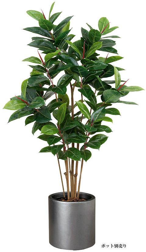 【ツリー・観葉】150cmゴムの木(M)