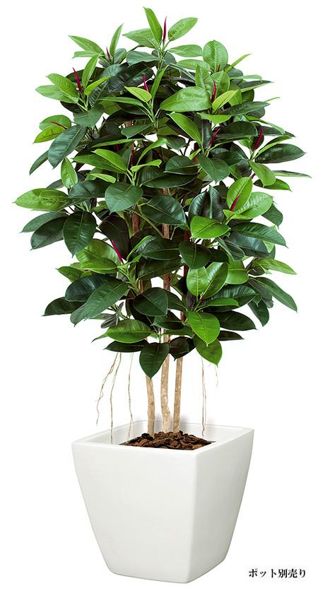 【ツリー・観葉】150cmゴムの木(M)(ナチュラルトランク)