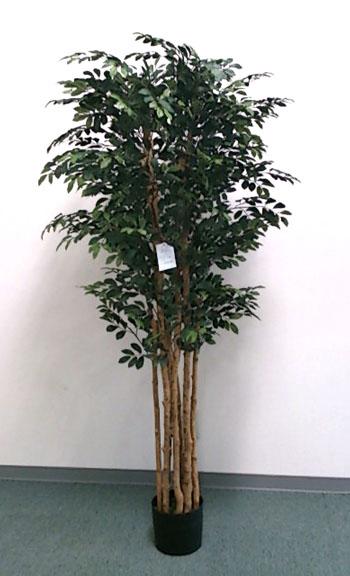 【ナチュラルツリー・観葉】150cmトネリコツリー(ナチュラルトランク)