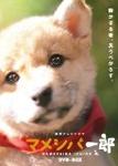 【送料無料】連続テレビドラマ マメシバ一郎 DVD-BOX/佐藤二朗[DVD]【返品種別A】
