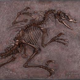 ヴェロキラプトルの化石(ブロンズ仕立て) / Velociraptor Freeze
