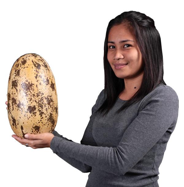 卵置物インテリア 巨大タマゴ恐竜(Theropod)のタマゴ・大 / Theropod Egg 12