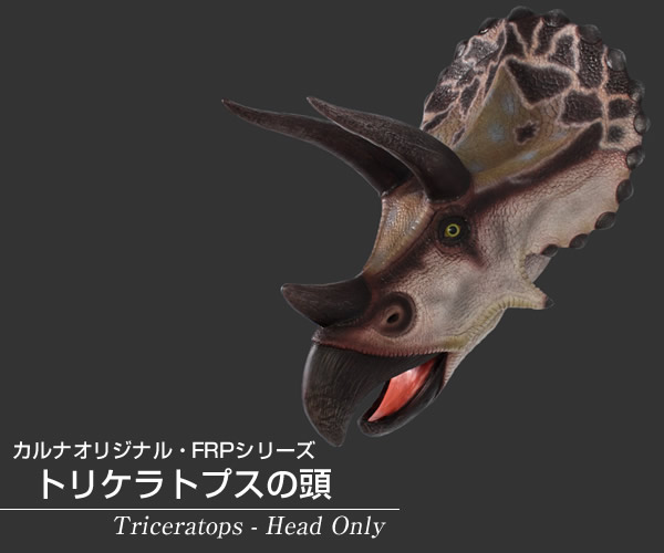 トリケラトプスの頭 / Triceratops - Head Only