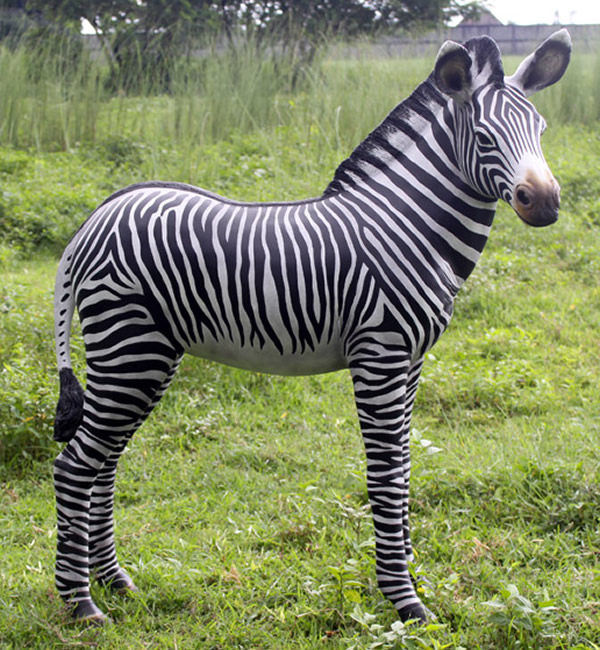 シマウマの赤ちゃん / Zebra Foal