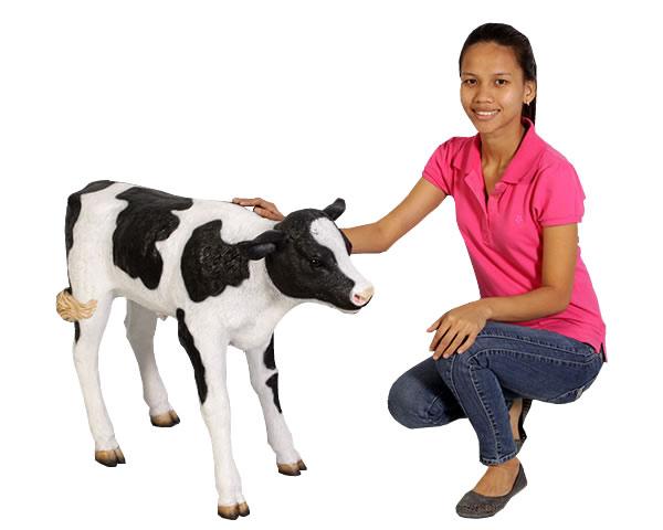生まれたての乳牛 / New Born Calf