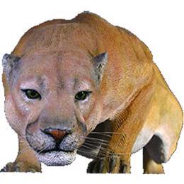 動物オブジェ クーガー / Cougar