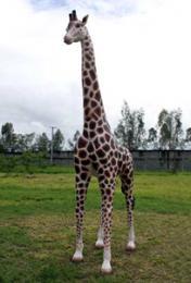 置物動物インテリアキリン置物インテリア 動物親キリン/Giraffe 12Ft.