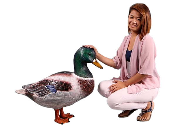 マガモ / Mallard Duck 24