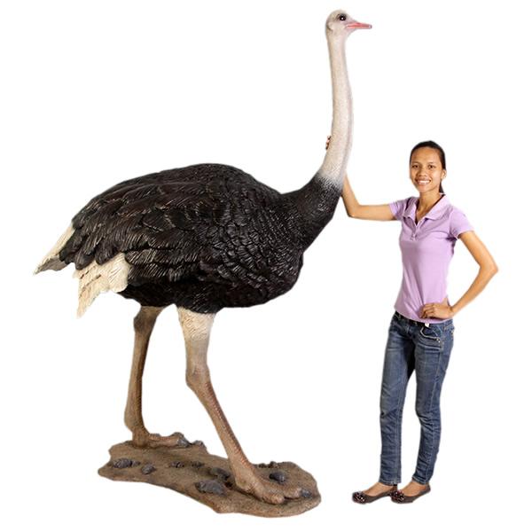 ダチョウ / Ostrich