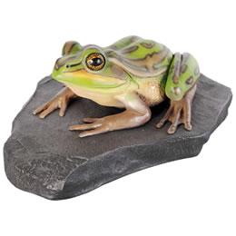 動物オブジェ 岩の上でくつろぐキンスジアメガエル / Green and Golden Bell Frog