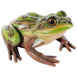 置物動物インテリア蛙カエル動物オブジェ は虫類子キンスジアメガエル / Green and Golden Bell Frog fr100003