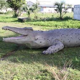 置物インテリア 爬虫類ワニ 動物オブジェ 巨大クロコダイル / Crocodile 28ft.