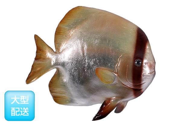 魚置物インテリア サカナさかなオブジェ ツバメウオ / Batfish