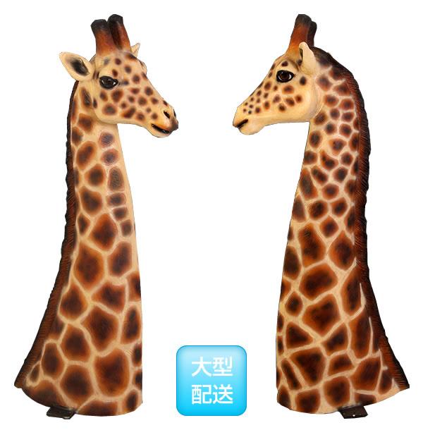 キリンの頭部 / Giraffe Head