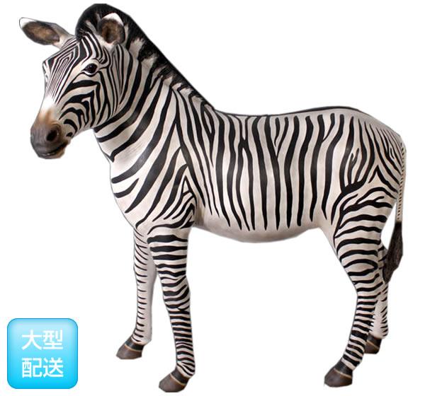 シマウマ / Zebra
