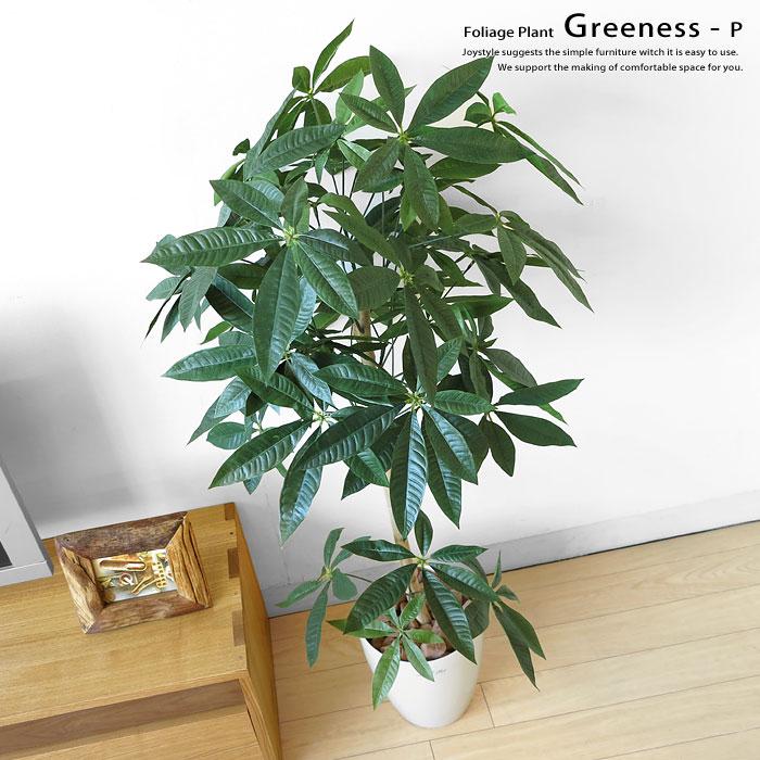 観葉植物 パキラトピアリー GREENESS