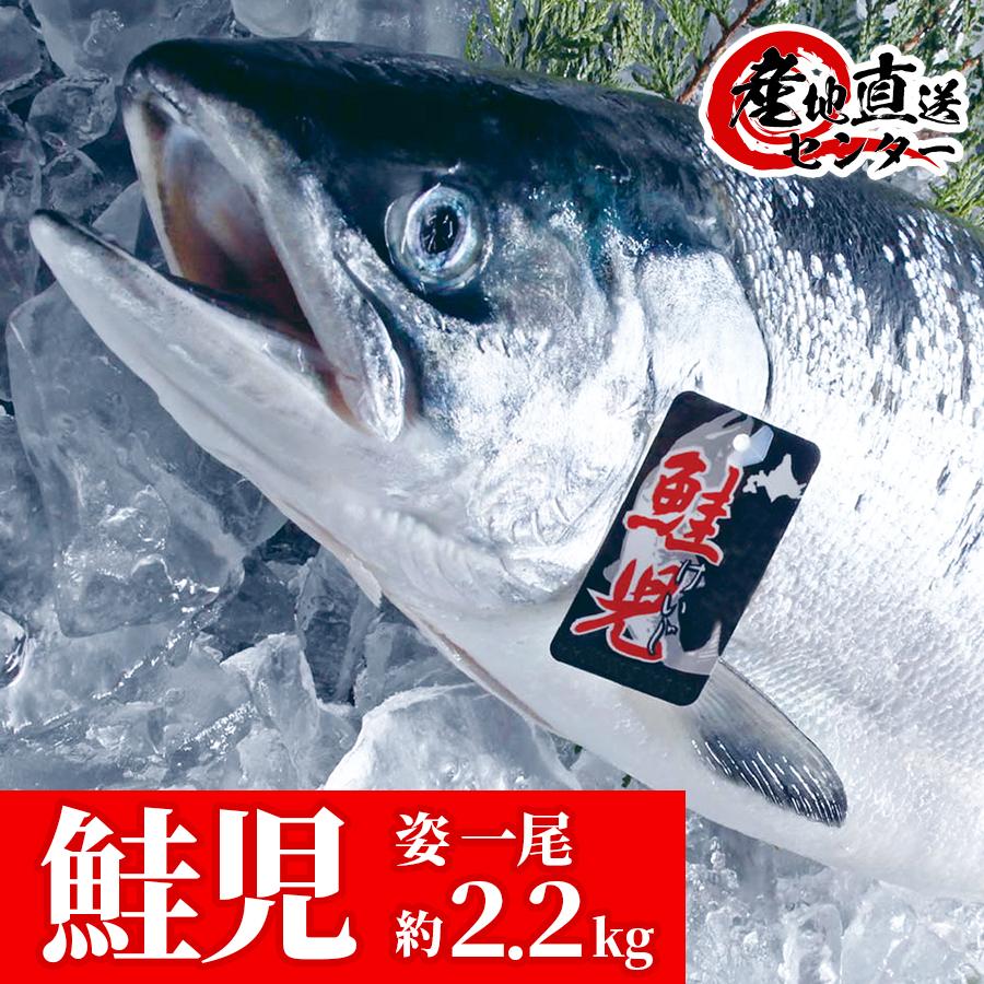 鮭児 姿1尾 約2.2kg 木箱入り 証明書・タグ付 限定3本 ケイジ お祝い 慶事 ギフト お歳暮 オーダーメイド