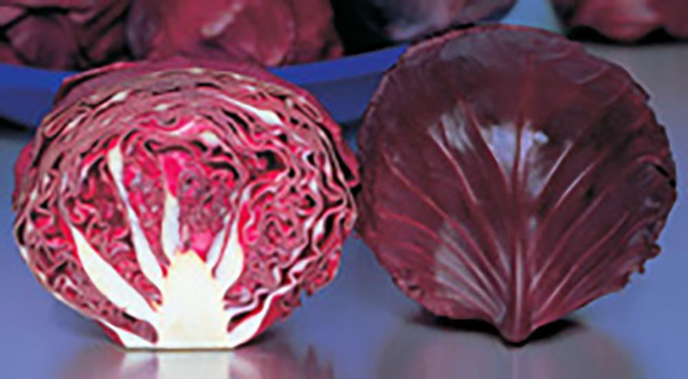 低温結球性に優れた ボールタイプの色鮮やかな紫キャベツ レッドウイナー 20ml詰 キャベツ 宇治交配 たね 正規激安 種 通常6倍 丸種 出荷 タネ 5のつく日はポイント10倍