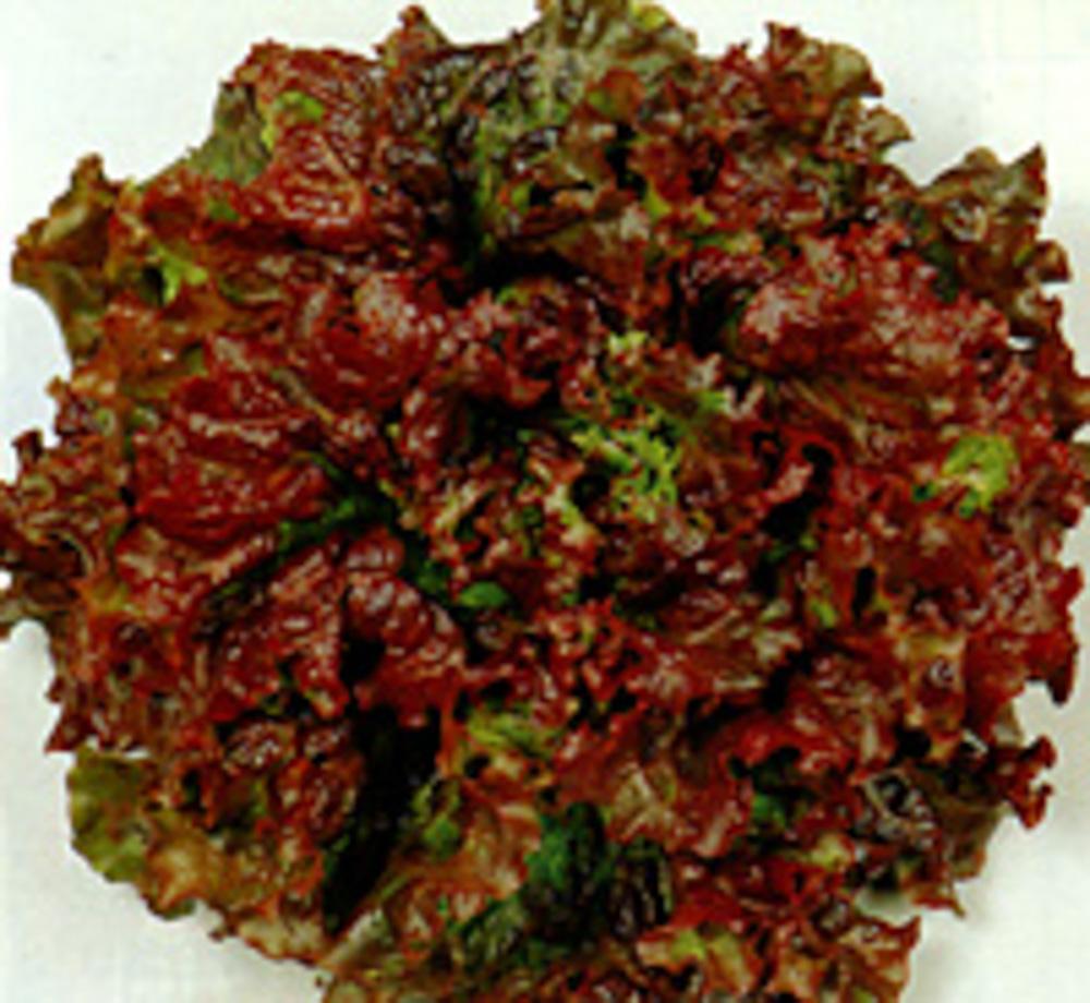 大幅にプライスダウン 耐寒性にすぐれ 尻腐れの少ないサ二ーレタス 色鮮やかなサ二ーレタス、高温期も赤色の発色がよい。葉肉厚く、やわらかで食味よい レッドウェーブ レタス ペレット5千粒 即出荷 種 タネ たね 5のつく日はポイント10倍 サカタ 通常6倍