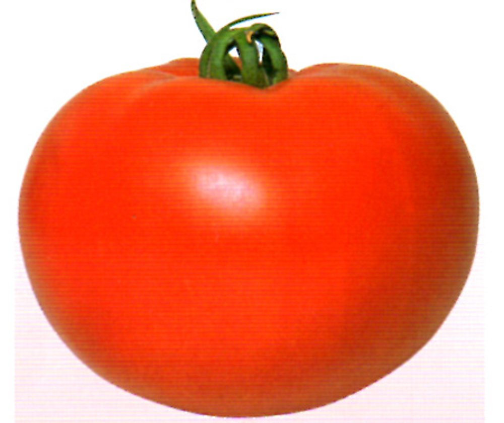 果実肥大抜群!葉かび病に強い硬玉品種!! CF北王 1000粒 トマト とまと 蕃茄【渡辺採種場 種 たね タネ 】【通常5倍 5のつく日はポイント10倍 一万円以上の購入で5%OFFクーポン】