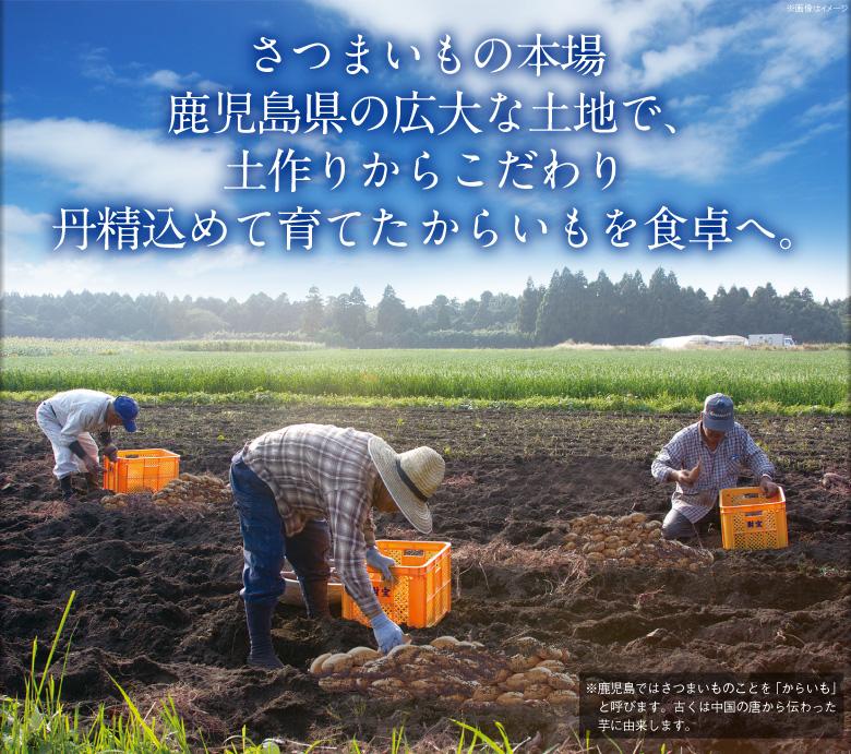 さつまいも 鹿児島県種子島産 安納芋(生芋)約3kg 1箱 からいも サイズおまかせ お試し