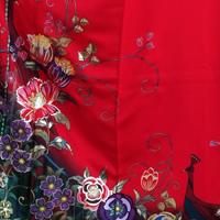 [Rental] long-sleeved kimono rental 136 red Peacock [wedding] [graduation ceremony] [full] [rental] [furisode] [long-sleeved kimono set]