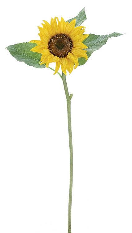 公式 ギフト プレゼントに フェイクグリーンSC触媒で空気すっきり 12個から注文可能 アートフラワー 造花 シングルサンフラワー 花材 即納