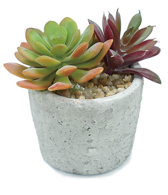 好評受付中 ギフト プレゼントに フェイクグリーンSC触媒で空気すっきり 12個から注文可能 期間限定で特別価格 サキュレントポット アートフラワー 造花 花材