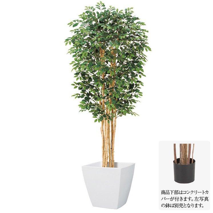 【人工観葉植物】トネリコツリー S 150cm ナチュラルトランク 【観葉植物 造花 大型 フェイクグリーン 光触媒 CT触媒 インテリア】[G-L]