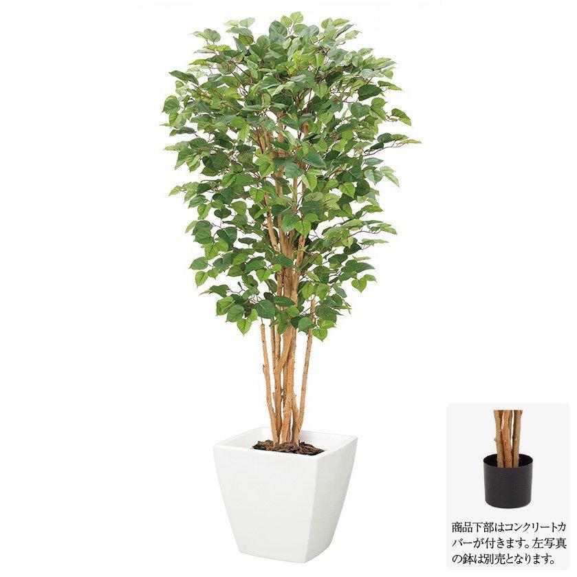 【フェイクグリーン】コットンウッドツリー S 150cm ナチュラルトランク 【観葉植物 造花 大型 人工観葉植物 光触媒 CT触媒 インテリア】[G-L]
