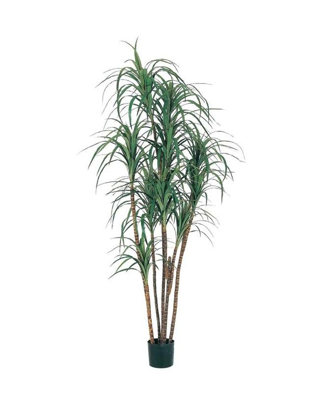 フェイクグリーン 大型 ドラセナツリー 200cm 鉢植(ナチュラルトランク)【観葉植物 造花 CT触媒/光触媒 フェイク グリーン】[D-F]