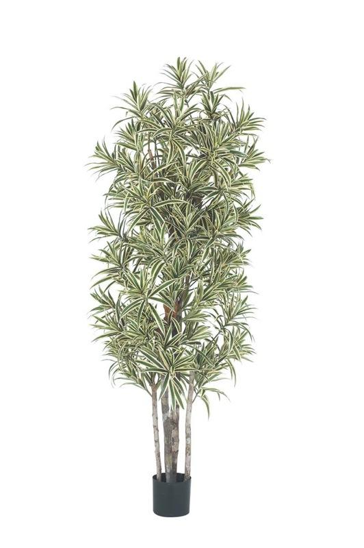 【フェイクグリーン 大型】ドラセナリフレクサツリー 180cm(ナチュラルトランク)【観葉植物 造花 CT触媒/光触媒 フェイク グリーン】[D-F]