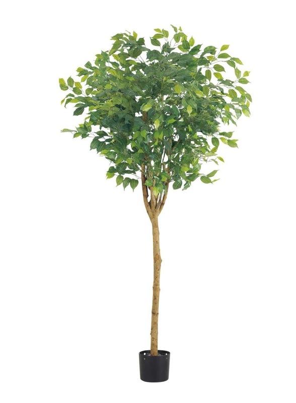 【フェイクグリーン 大型】ラウンドフィカスツリー 180cm(ナチュラルトランク)【観葉植物 造花 CT触媒/光触媒 フェイク グリーン】[D-F]