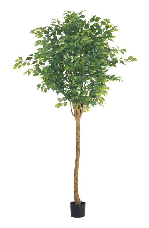 【フェイクグリーン 大型】ラウンドフィカスツリー 210cm(ナチュラルトランク)【観葉植物 造花 CT触媒/光触媒 フェイク グリーン】[D-F]