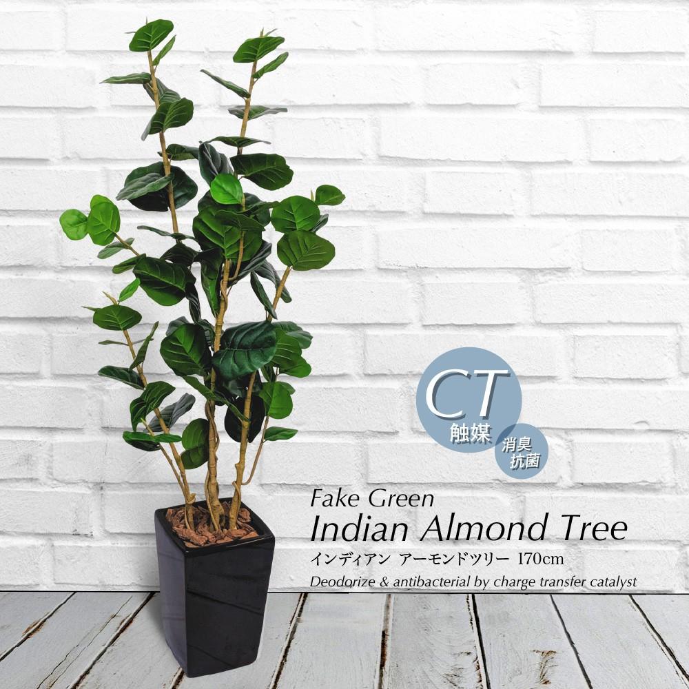 人工観葉植物 フェイクグリーン 観葉植物 造花 光触媒 大型 ナッツの木 インディアンアーモンドツリー 170cm 鉢植 フェイク グリーン インテリア おしゃれ CT触媒 お祝い