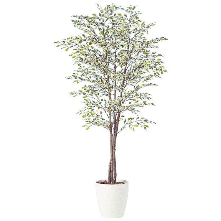 【フェイクグリーン 大型】 ベンジャミナスターライトトリプル (ベンジャミン) 180cm 鉢植 【人工観葉植物 観葉植物 造花 光触媒 CT触媒 インテリア】