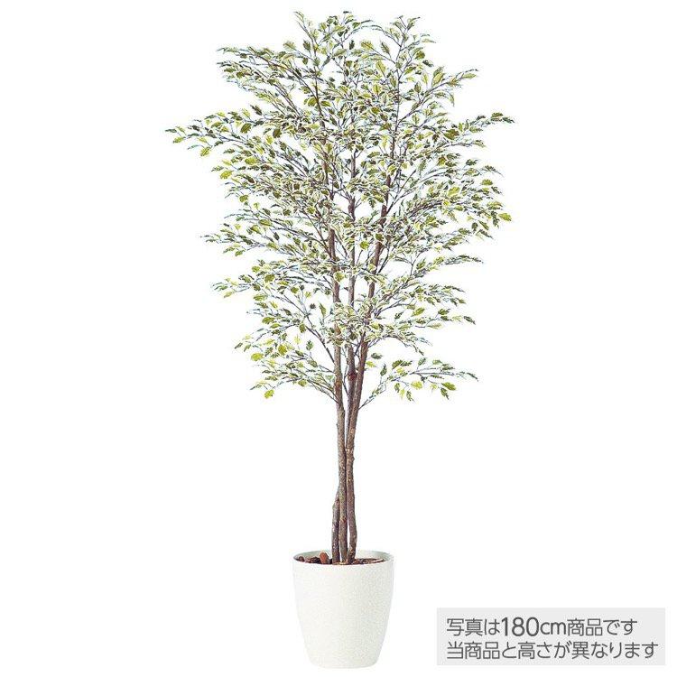 【フェイクグリーン 大型】 ベンジャミナスターライトトリプル (ベンジャミン) 150cm 鉢植 【観葉植物 造花 人工観葉植物 光触媒 CT触媒 インテリア】