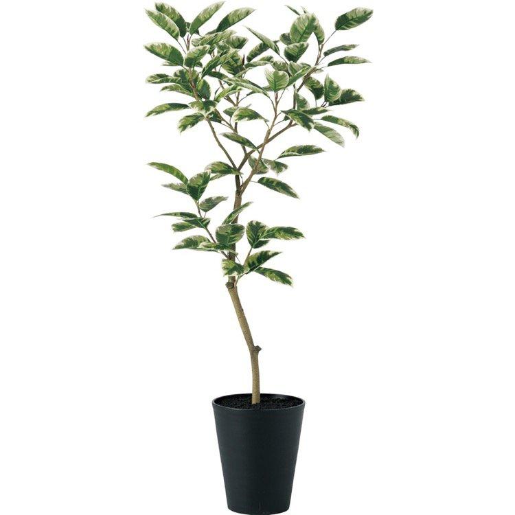 【観葉植物 造花】 デコラトリカラー FST (ゴムの木) 150cm 鉢植 【フェイクグリーン 大型 人工観葉植物 光触媒 CT触媒 インテリア】