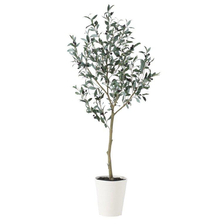 【フェイクグリーン】 ブラックオリーブ FST 150cm 鉢植 【観葉植物 大型 造花 人工観葉植物 光触媒 CT触媒 インテリア】