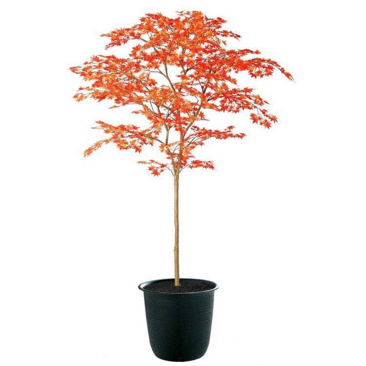 【フェイクグリーン 大型】 ヤマモミジ RED FST 180cm 鉢植 【人工観葉植物 観葉植物 造花 光触媒 CT触媒 インテリア】